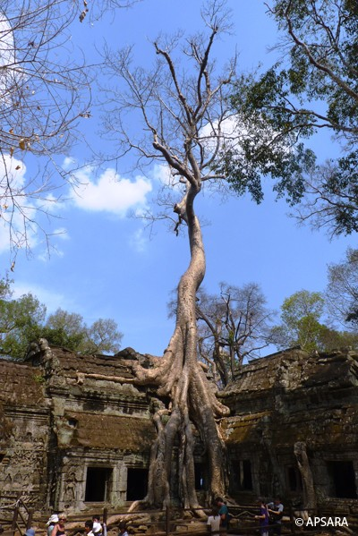 Ta Prohm, Preah Khan, Neak Pean, Bayon, Royal terraces